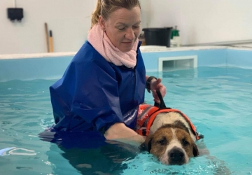 Hound Hydrotherapy