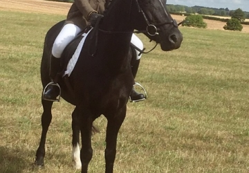Hunting and Pony Club All rounder with great potential